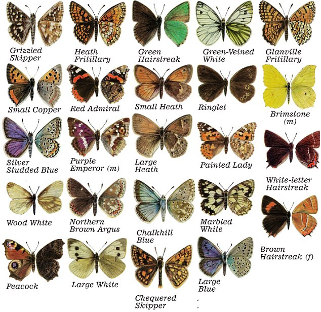 an exoskeleton  The complete metamorphosis lifecycle of butterflyButterfly Species Names